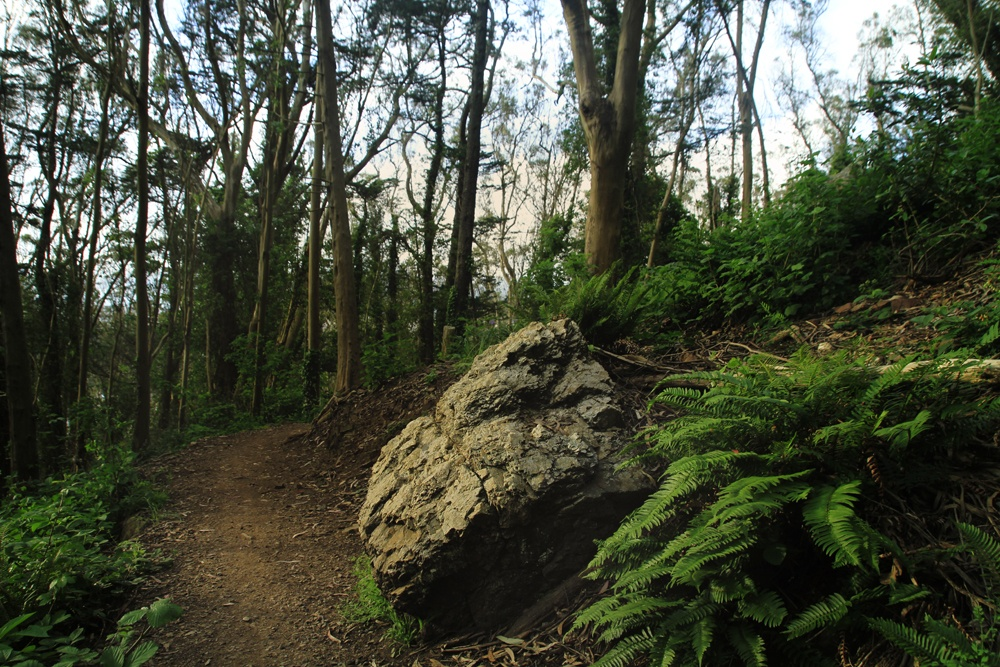 Whimsy Soul Sutro Forest