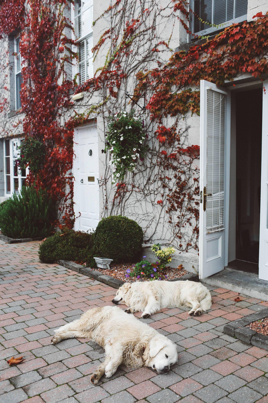 Killkenny hotel estate Lyrath dogs
