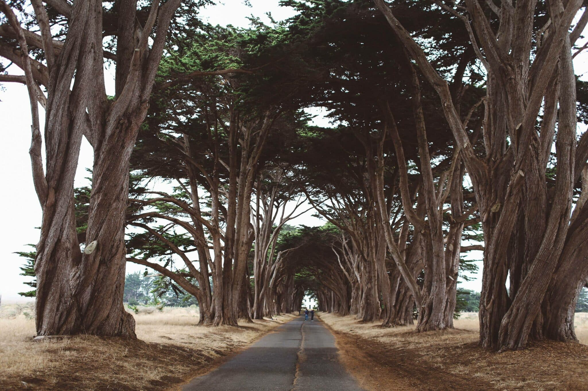 Cyprus Tree Tunnel Point Reyes
