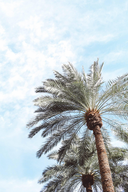 scottsdale hotel pool palm trees