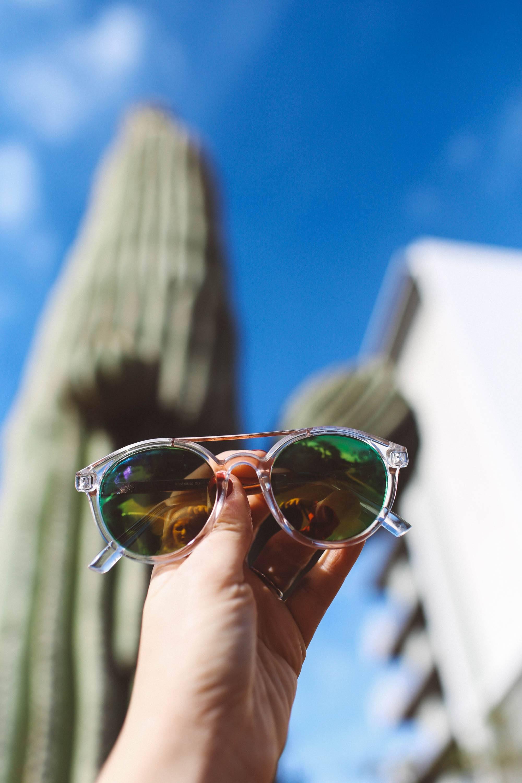sunglasses cactus