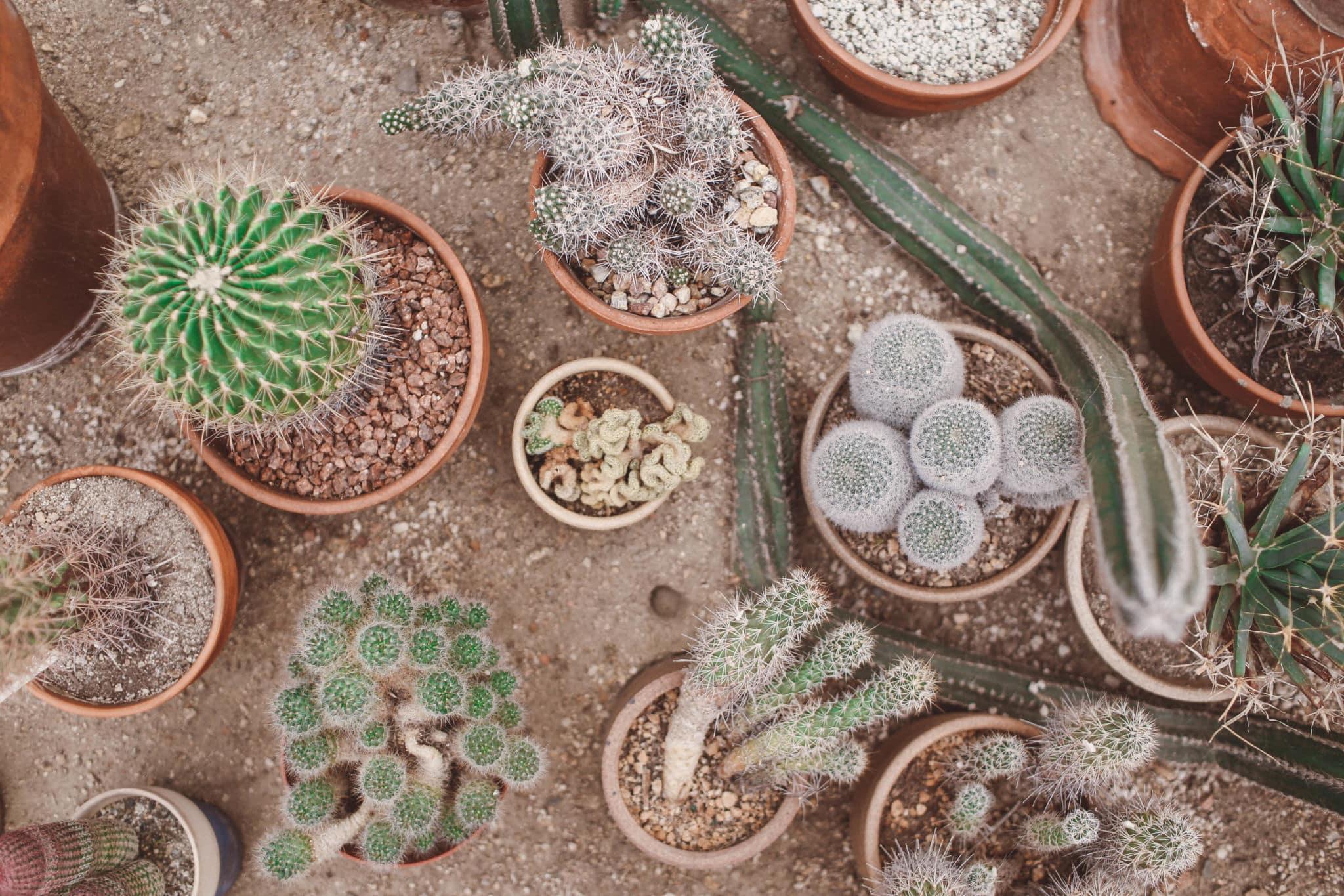 palm springs cactus garden
