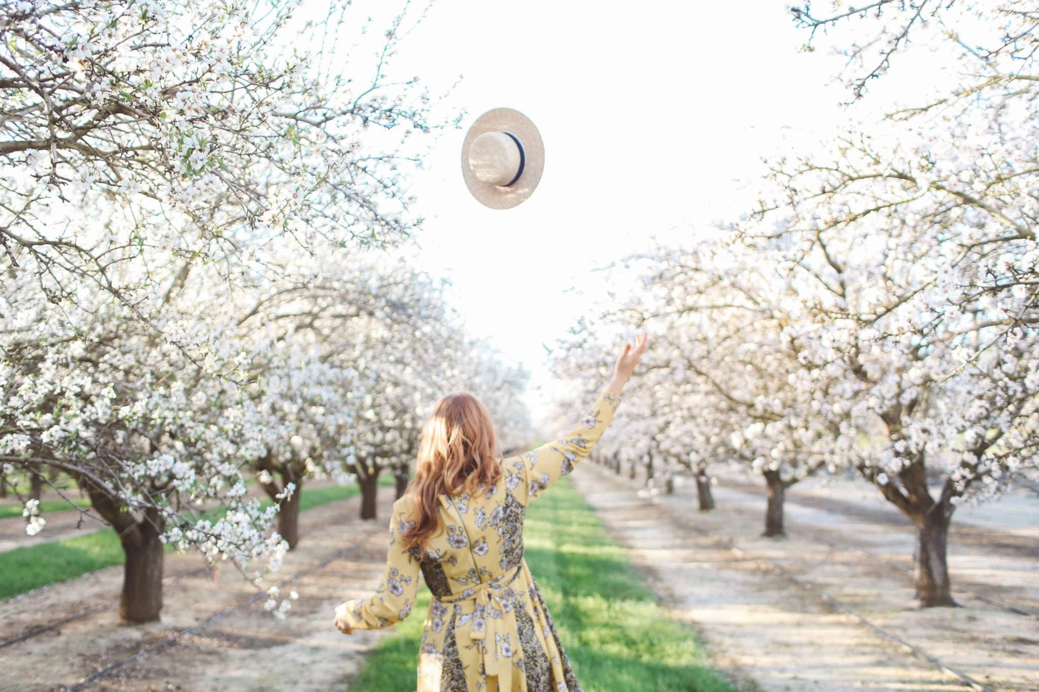 flowers almond blossoms california yellow dress