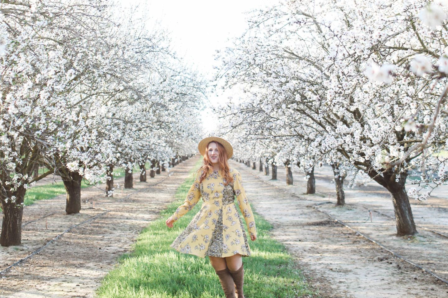 Best Almond Blossoms in California