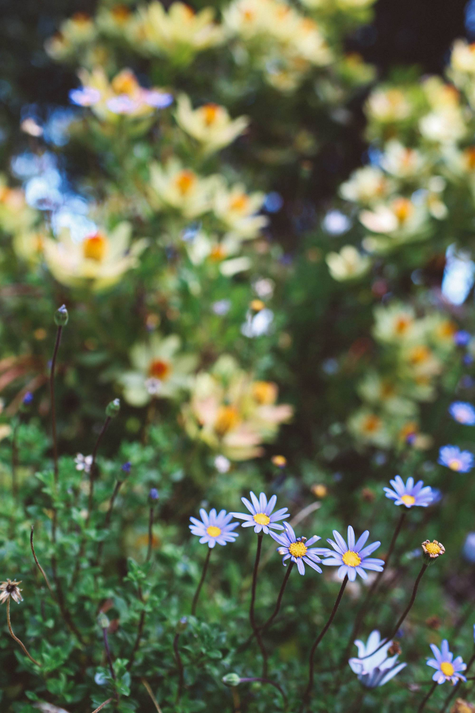 spring flowers san francisco