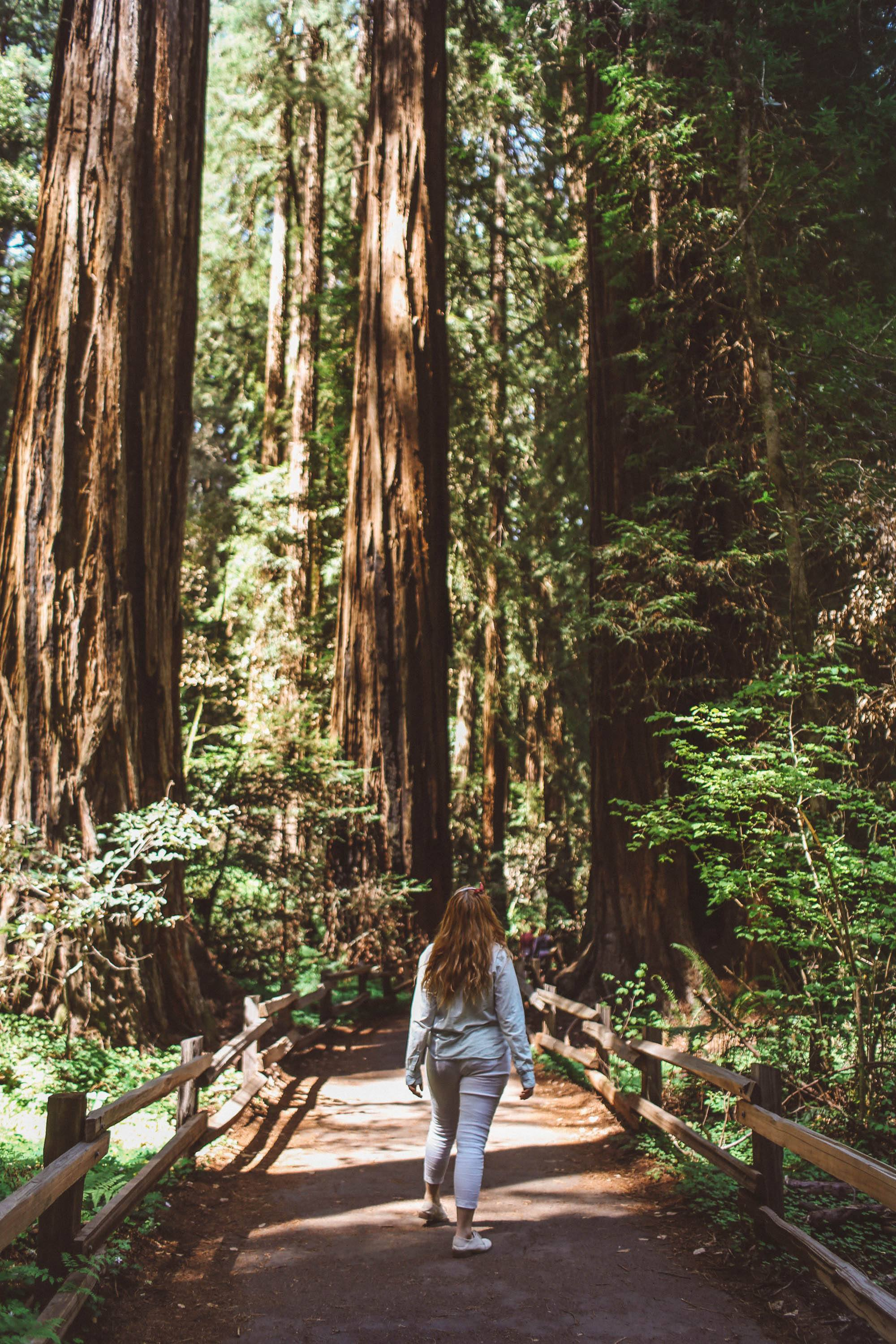 A Woman looking at the redwood trees on a boardwalk at Muir Woods