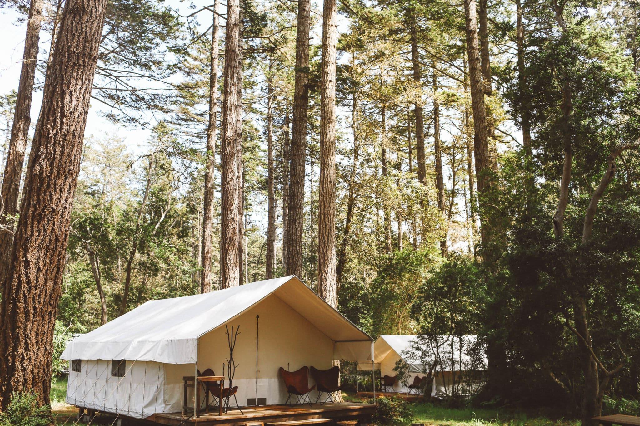 Glamping tent among fir trees