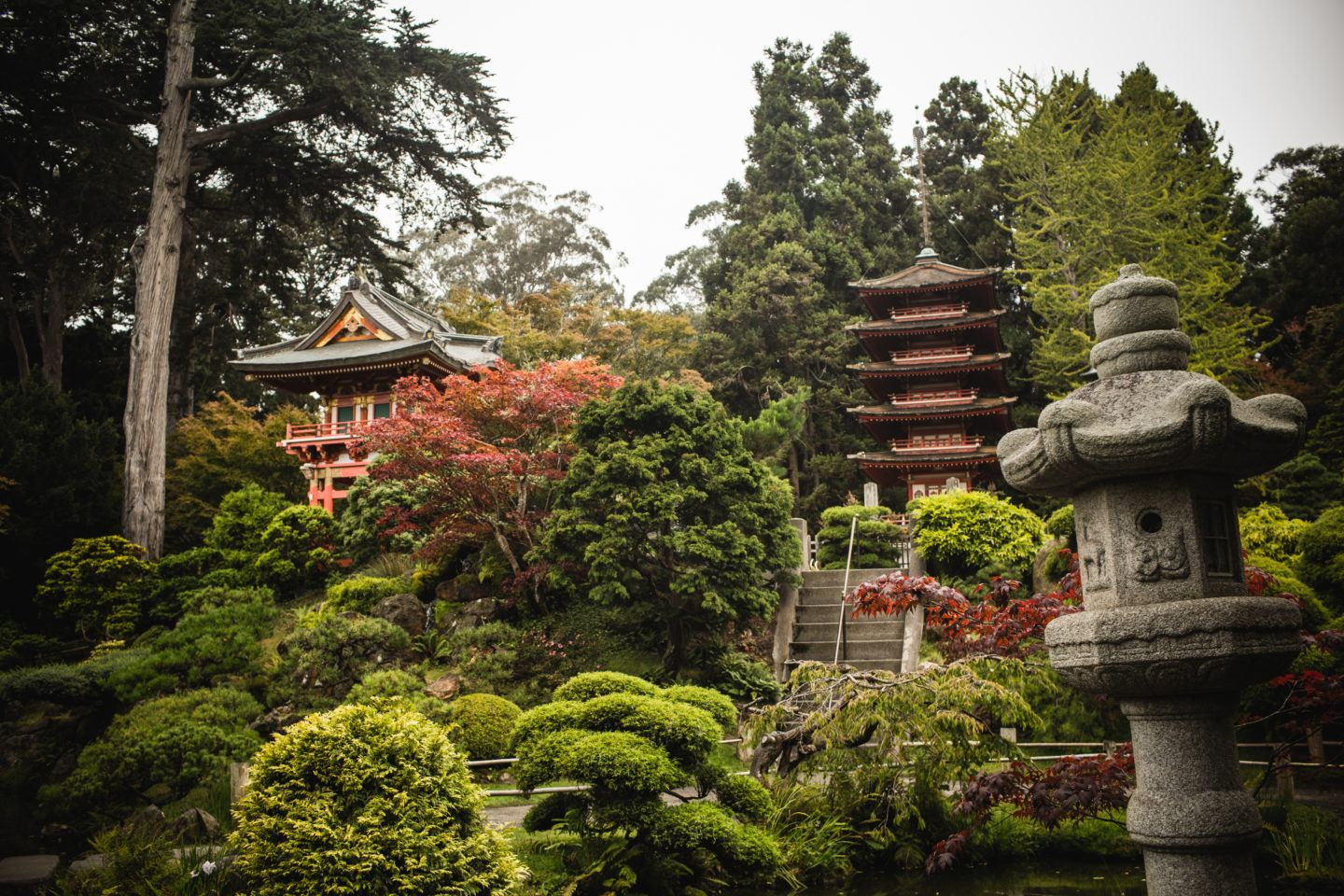 Tips For Visiting The San Francisco Japanese Tea Garden