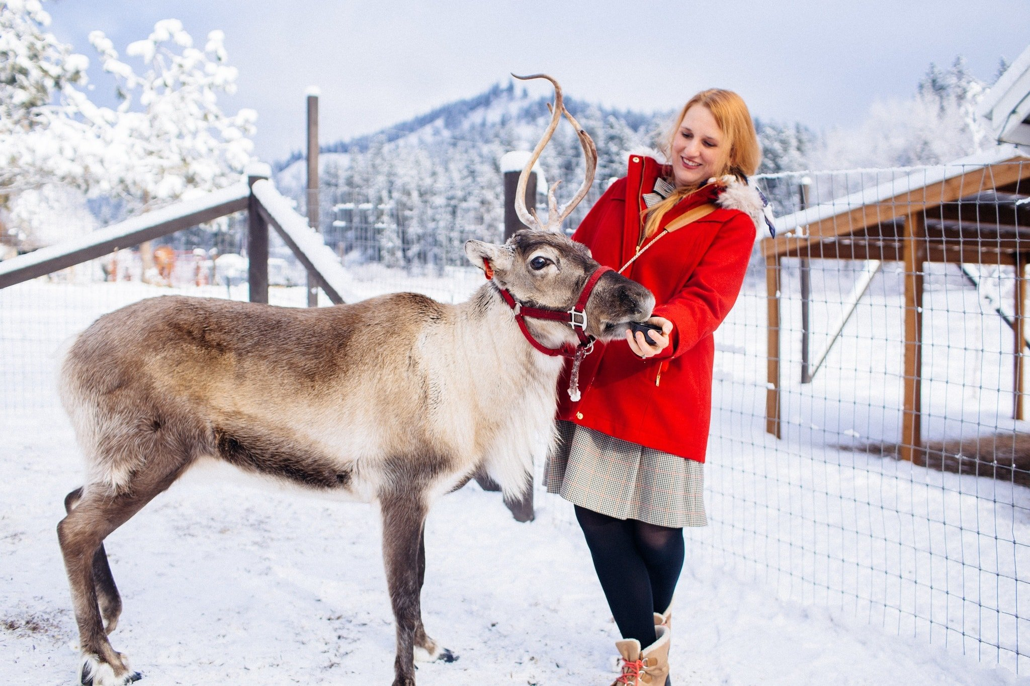 You Can Visit This Reindeer Farm In Washington