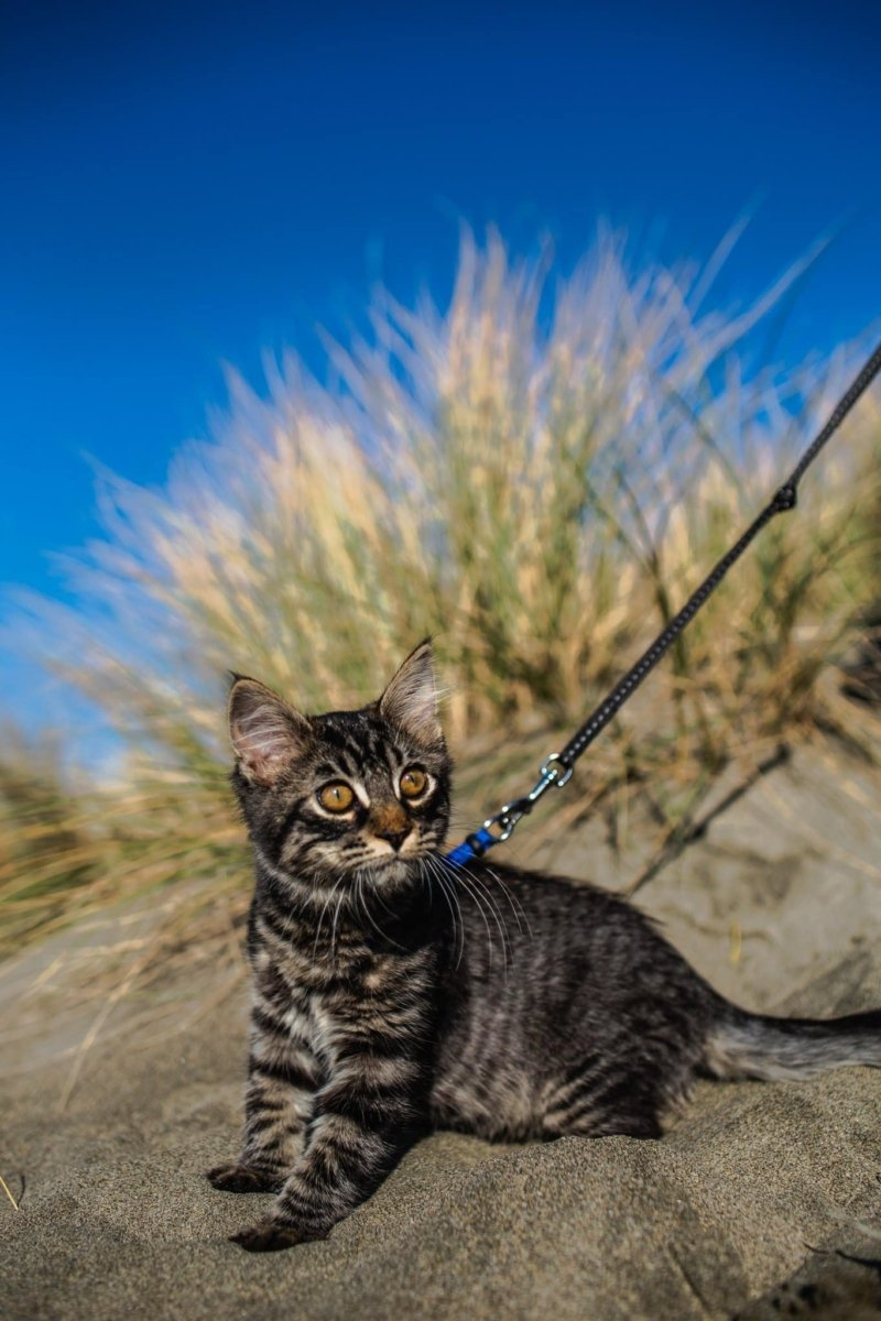 Cat at the beach