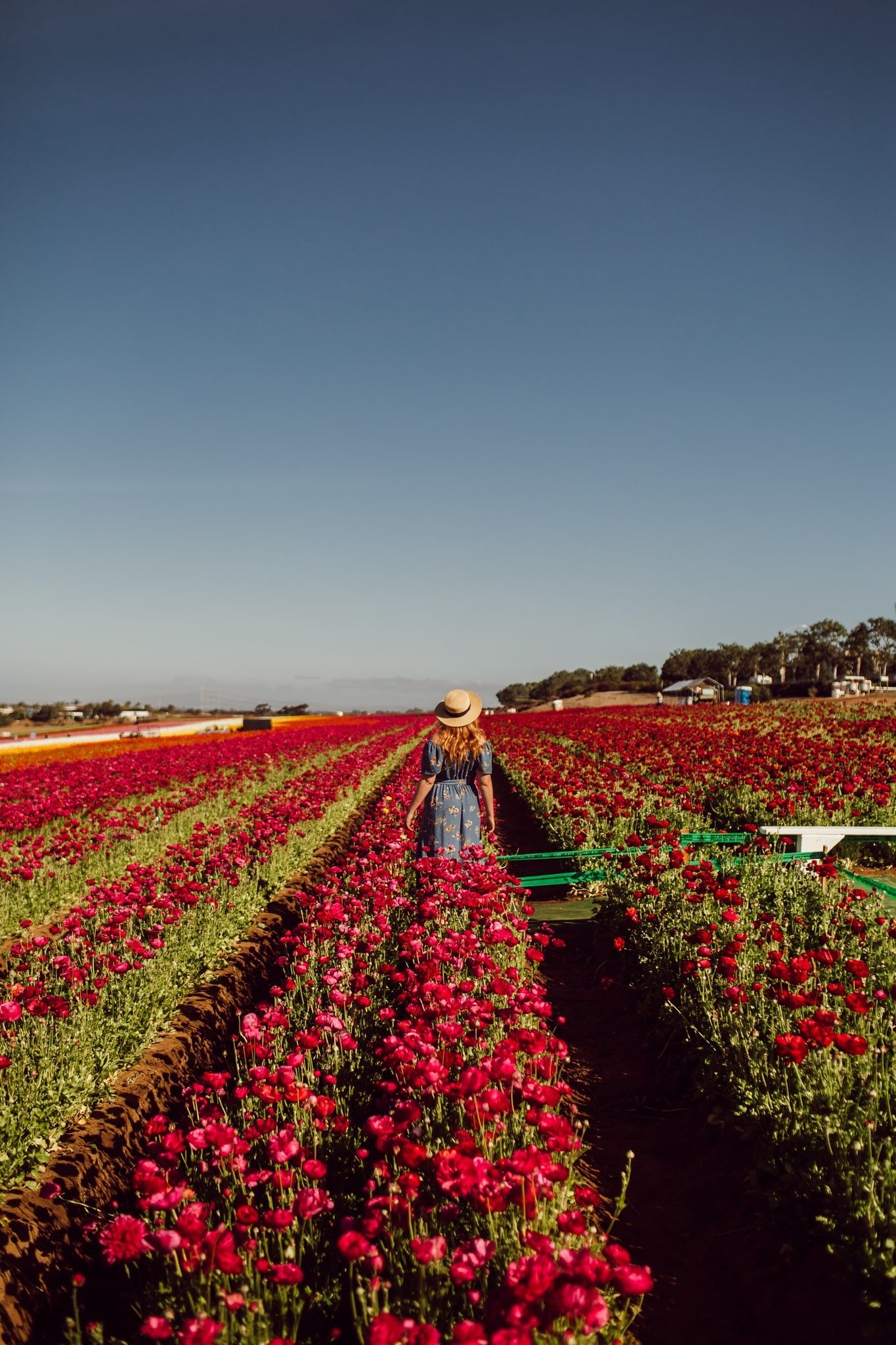 Wearing a blue floral print dress and straw hat at the Carlsbad Flower Field