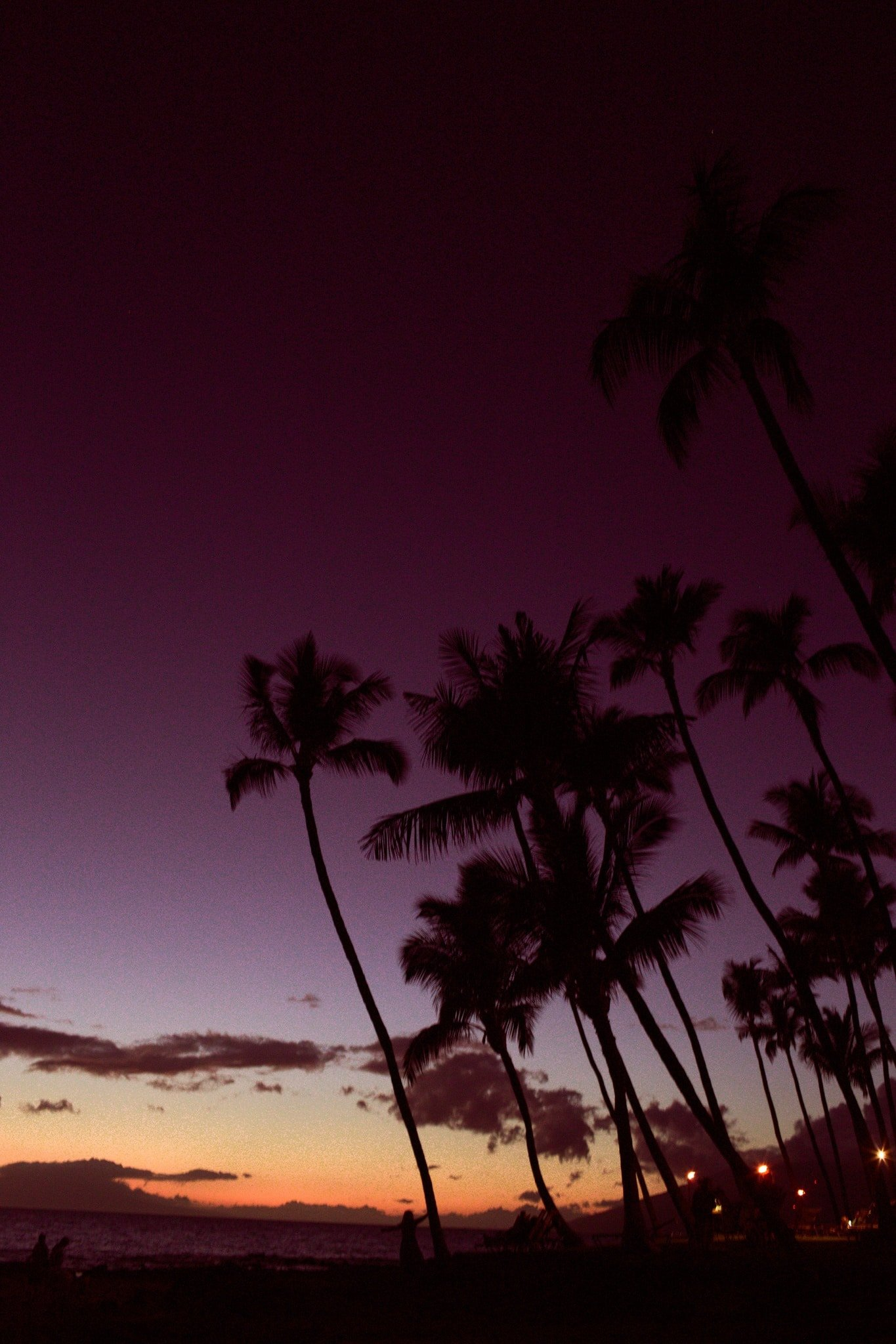 palm on the beach at sunet in Maui