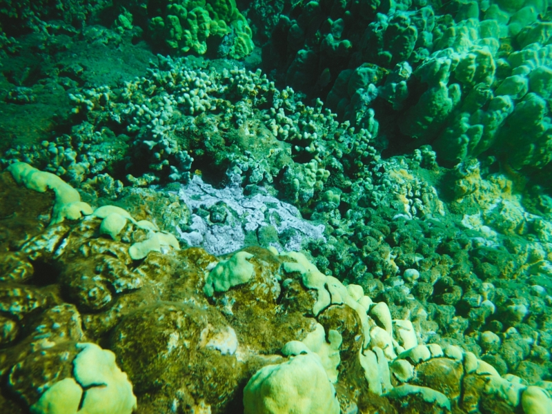Snorkel Maui Hawaii Cruise - coral reef