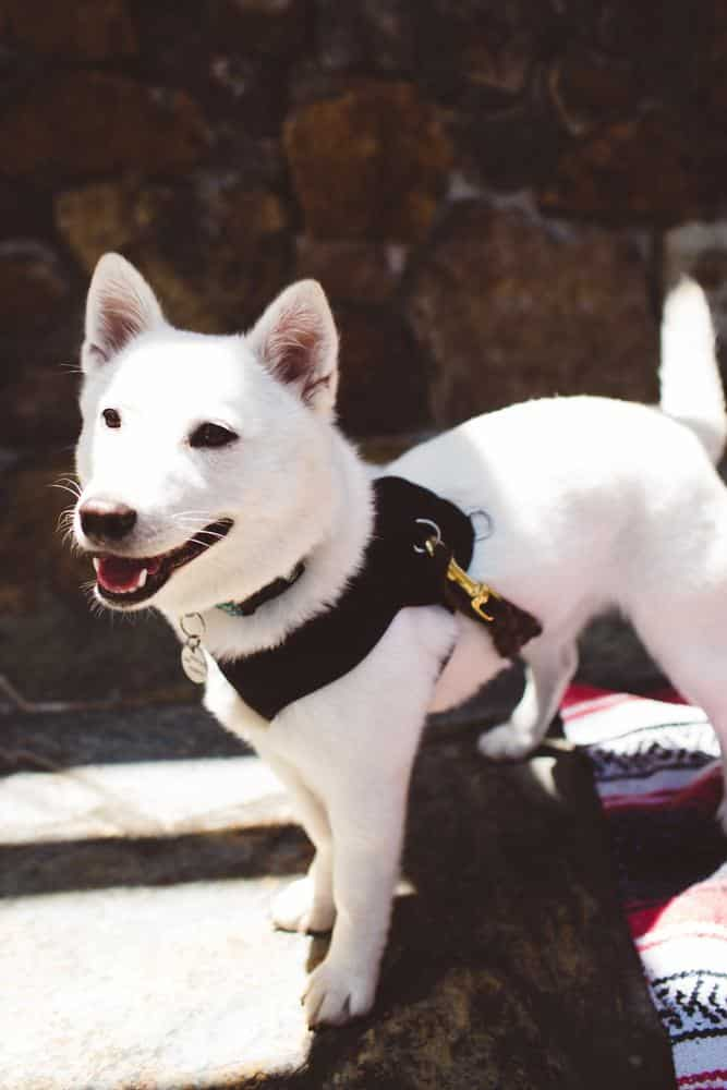Cute dog at Roth Estates