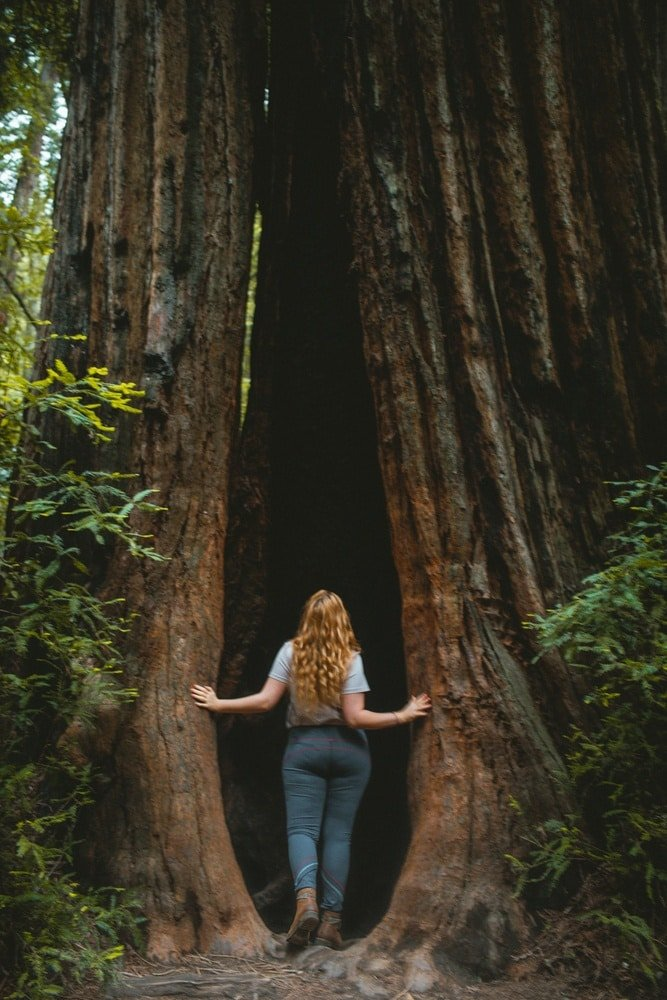 Woman looking into a large tree at Armstrong Redwoods State Park
