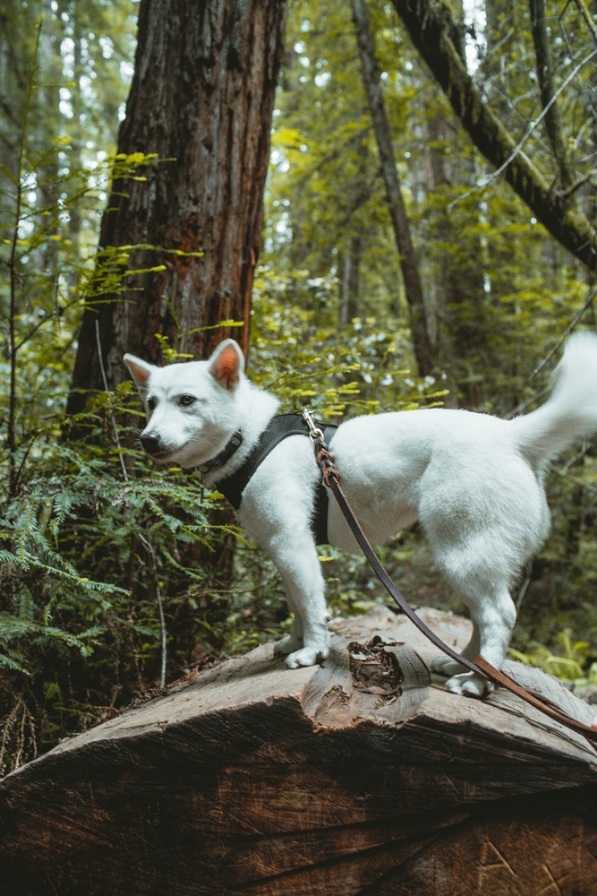 Cute Dog in the woods