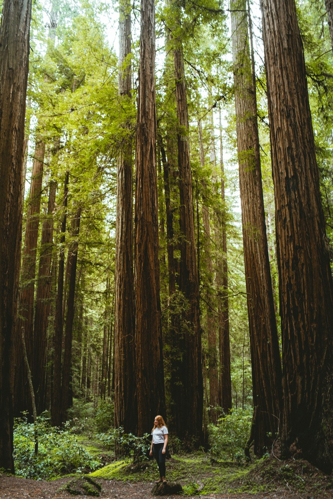 Woman standing among the Redwoods at Armstrong Redwoods State Park
