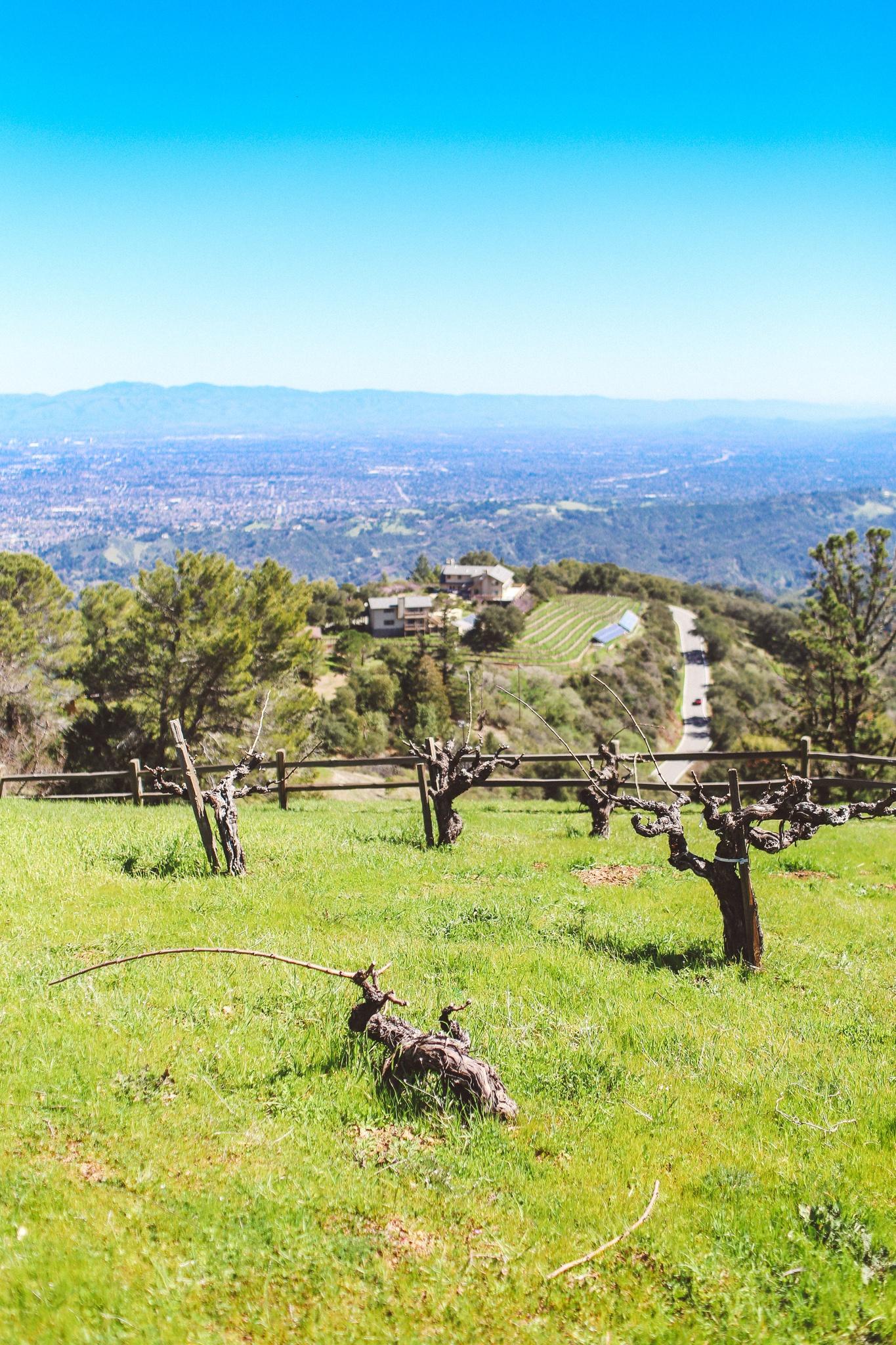 Incredible view at Ridge Winery in the Santa Cruz Mountains