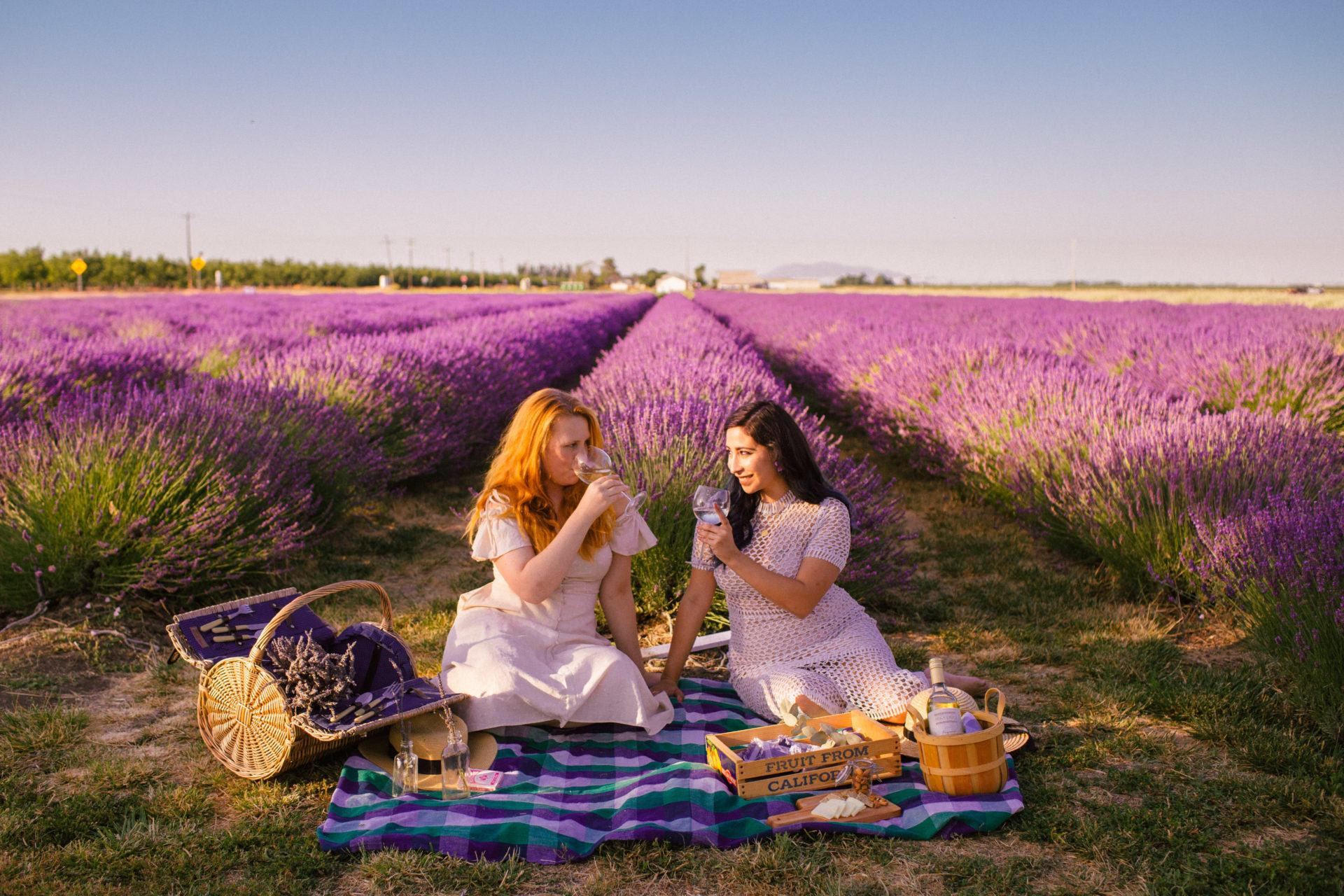5 Enchanting Lavender Fields In California To Visit This Summer