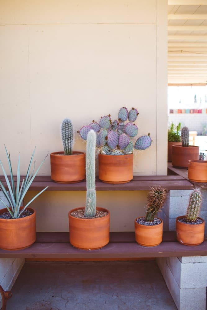 Potted Cacti in an amazing Joshua Tree Airbnb
