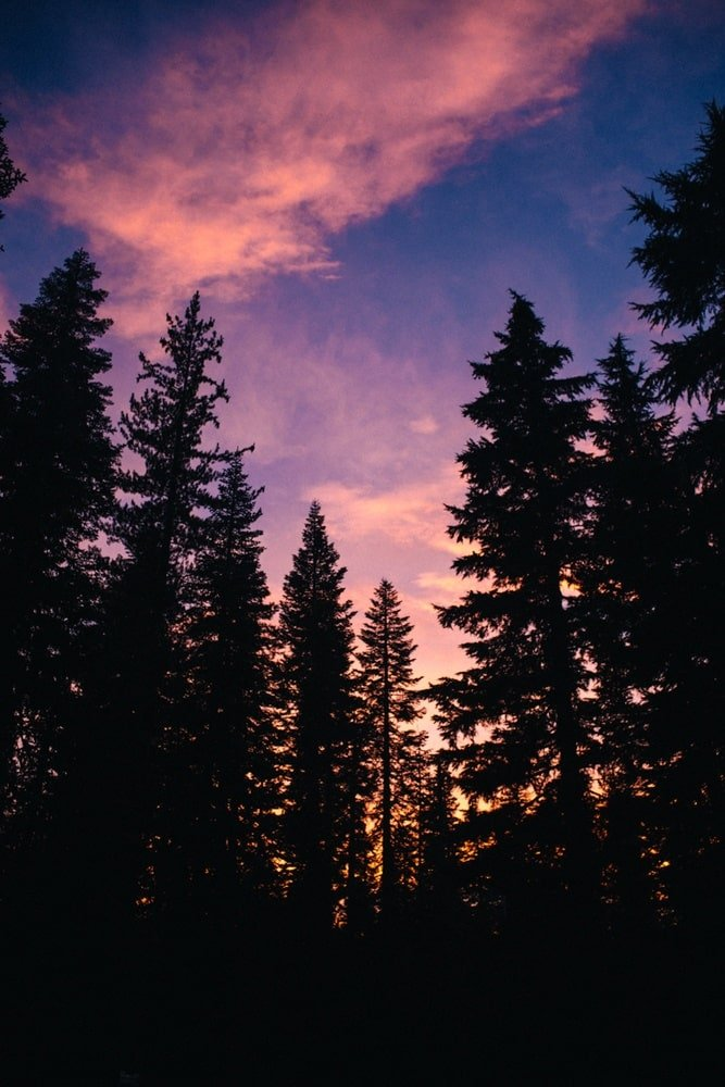 Sunset through the trees at Lassen Volcanic National Park