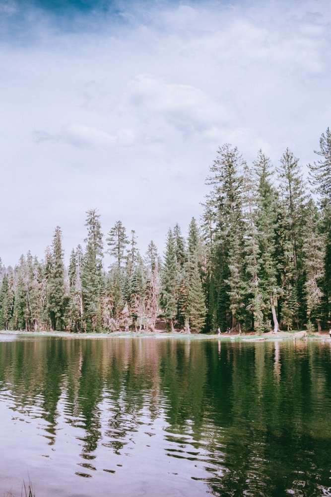 Trees lining Summit Lake in Lassen Volcanic National Park