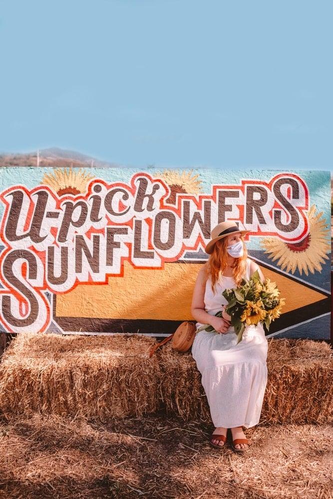 Kara at Andreotti Sunflower farm in Half Moon Bay, California