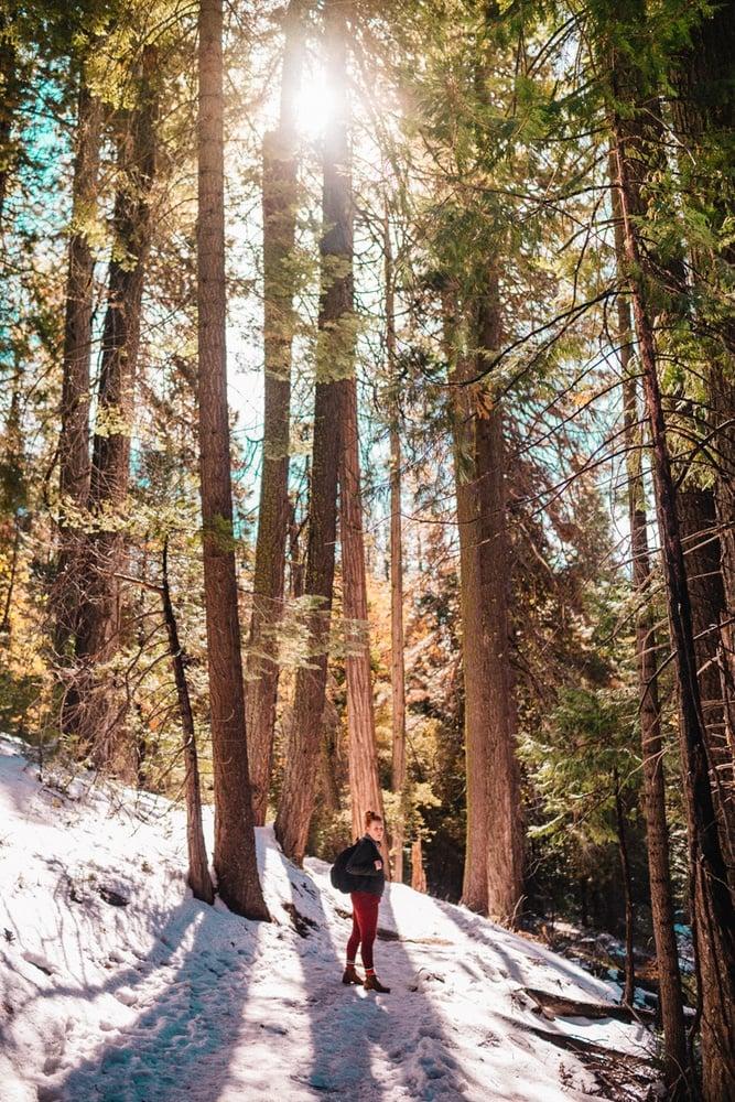 Kara hiking the snow covered path to Mariposa Grove in Yosemite National Park