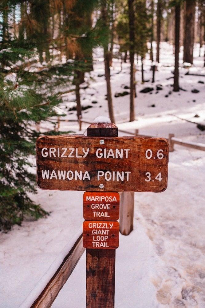 Multiple paths through Mariposa Grove in Yosemite National Park